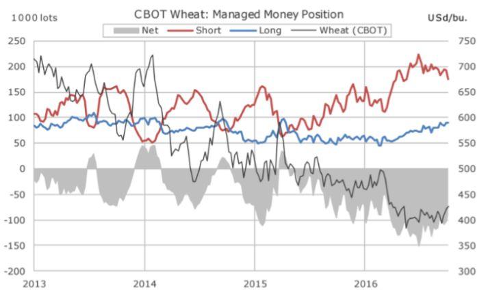 Пшеница набирает рост